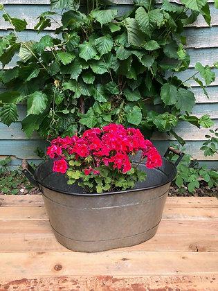 Galvanised Bucket Trough Planter