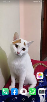 WhatsApp Image 2020-02-10 at 5.09.17 PM.
