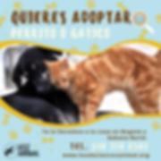 Copia_de_Se_busca_mascota_con_elementos_