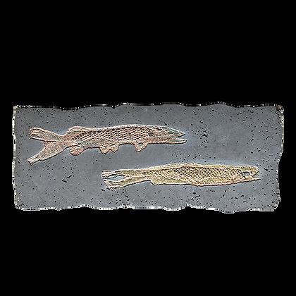 Fossile béton avec petits poissons dentelle