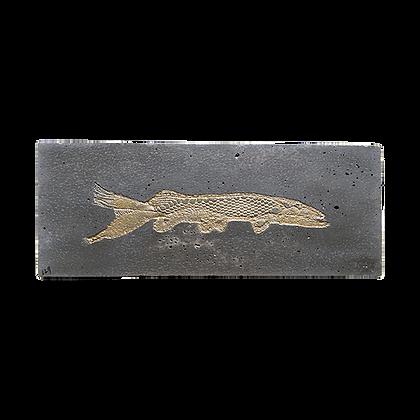 Fossile béton avec poisson long dentelle