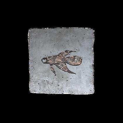 Fossile carré avec empreinte dentelle