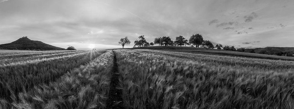 Barley%20Fields_edited.jpg