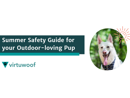 Summer Safety Guide for your Outdoor-loving Pup