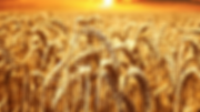 cereales-raffinees