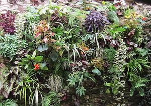 Allo DEKO st lo cuisine peinture mur végétal papier peint enduit sol PVC parquet moquette peintre bâtiment revetement décoration intérieur peinture
