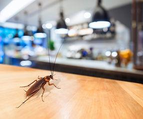 roach-business.jpg