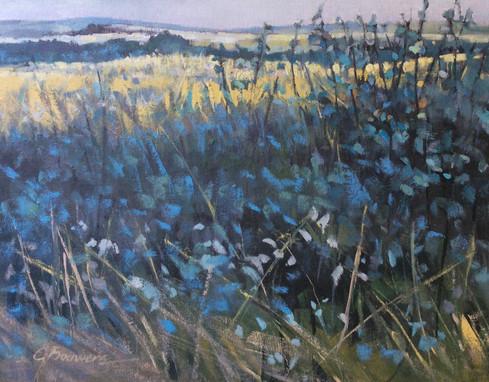 Willow Creek Grasses
