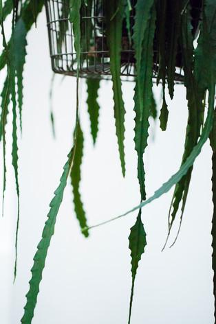 Stookkamer plant.jpg
