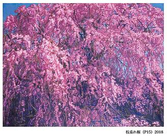 稲垣考二_枝垂れ桜.png