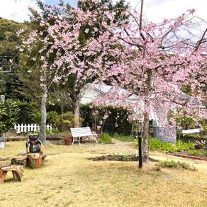 ガーデン & 彫刻庭園