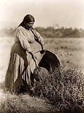 pomo-indian-woman-gathering-seeds-it-was