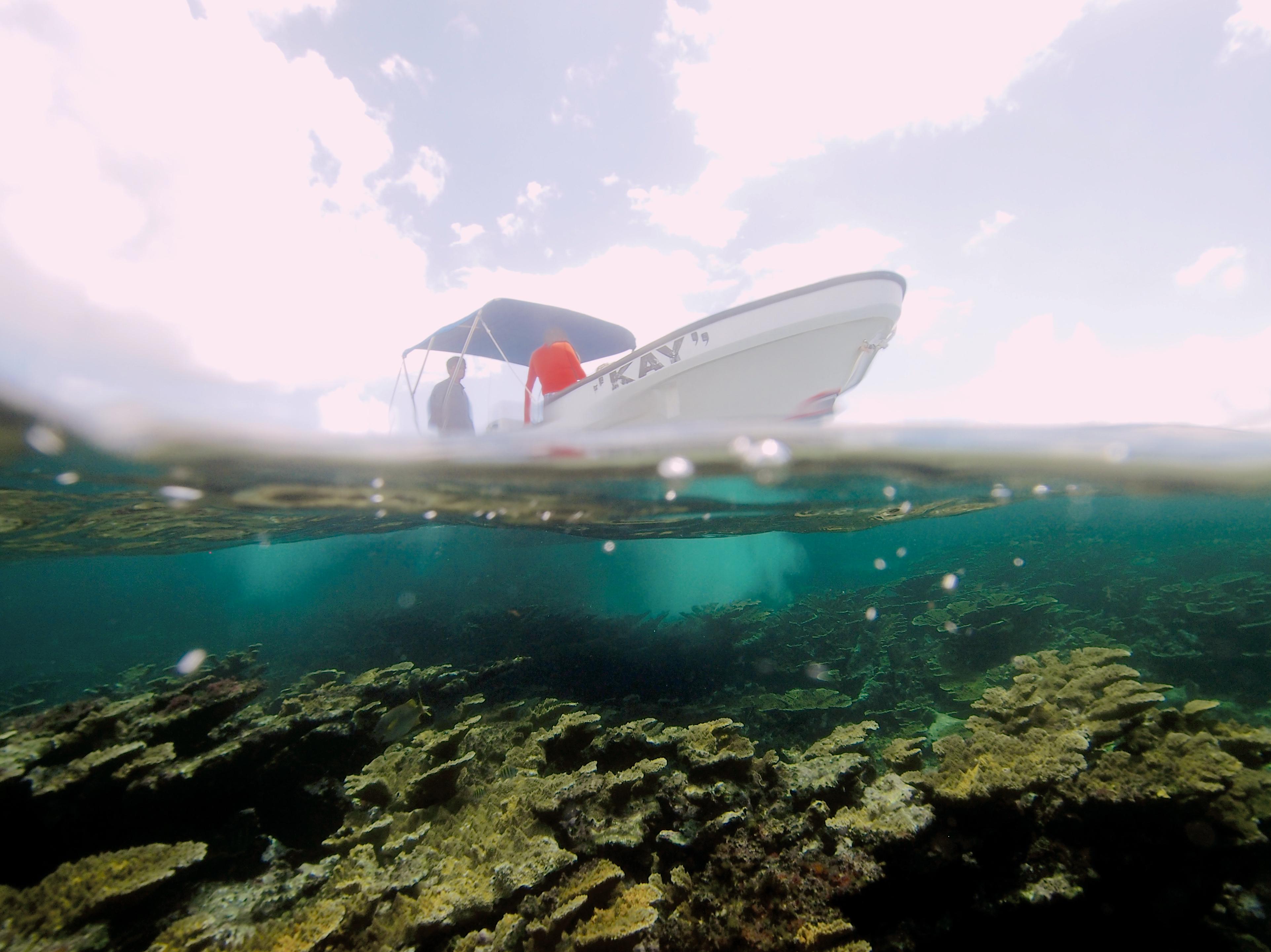 Puerto Morelos' Reef, México
