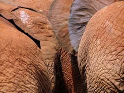 Nairobi zoo, Kenya