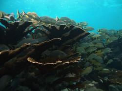 Limones Reef, Puerto Morelos, Mex