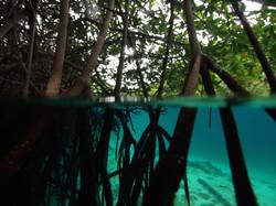 Mangroves in Tulum, México