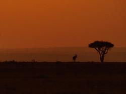 Masai Mara Reserve, Kenya