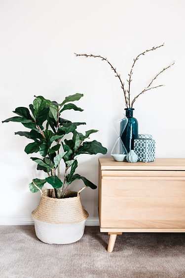 tall plant in pot glassware on timber drawers decor