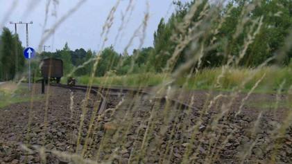 Auschwitz.jpeg