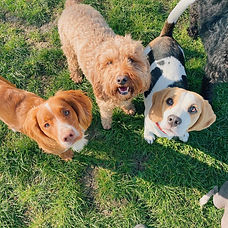 dogs - Waterloo Cheltenham.JPG