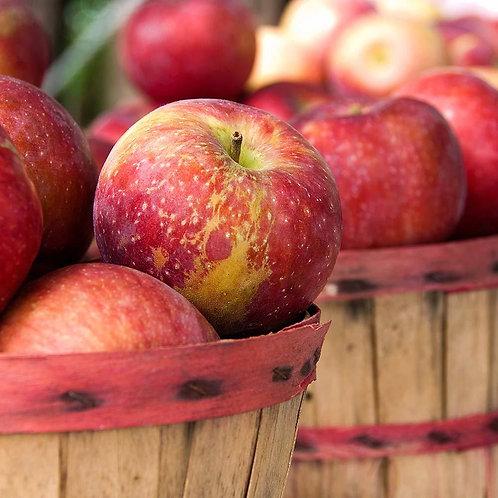 Apple Harves