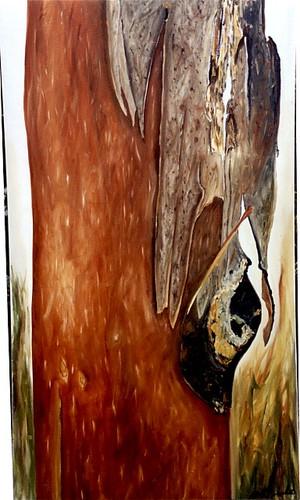 Eucalypt 5 76 x 137 cm