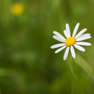 Einsame Blume