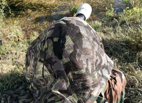 Wie findet und fotografiert man Wildtiere?