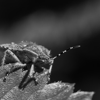 Neugieriger Käfer