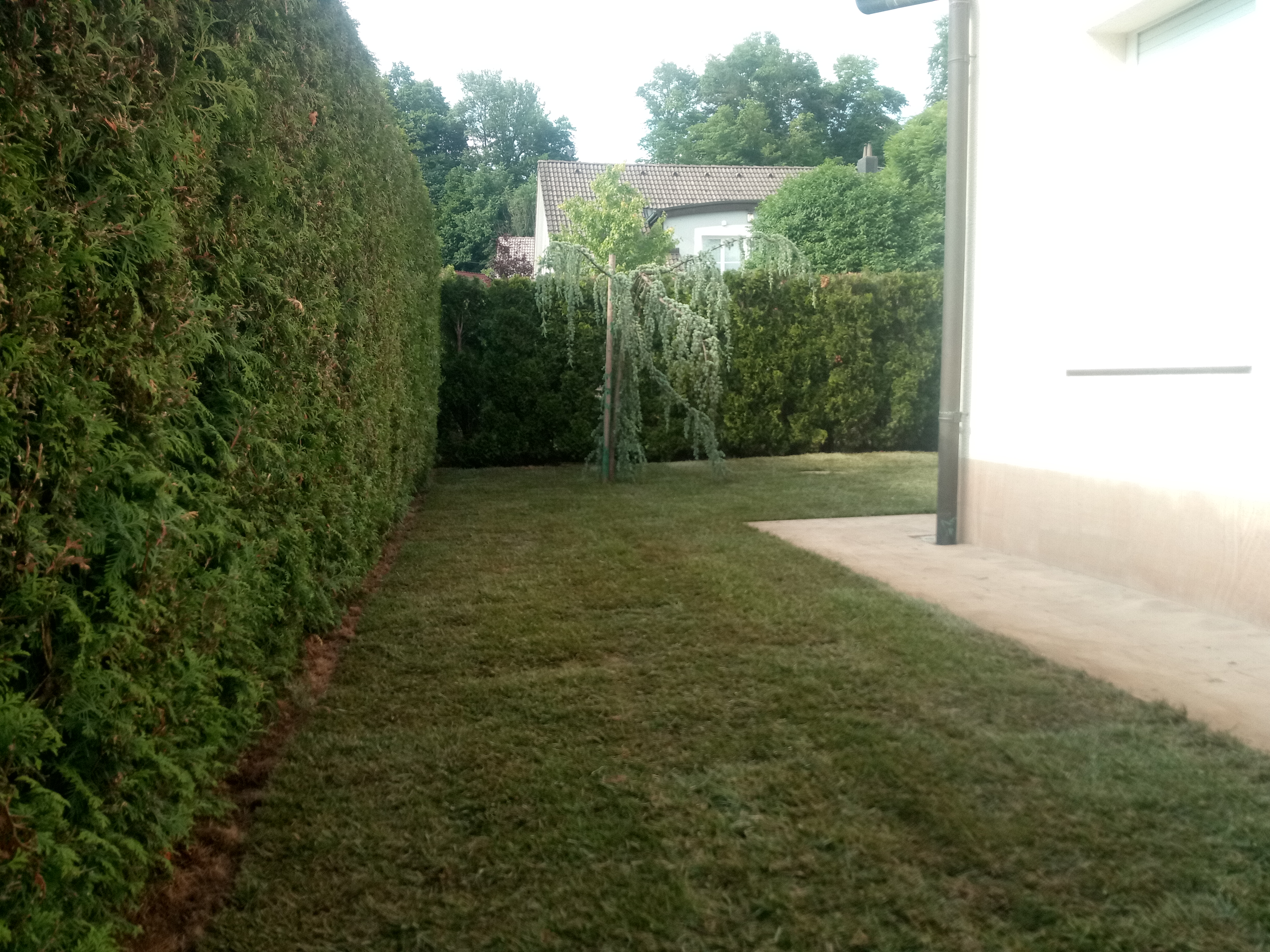 Travni tepihi