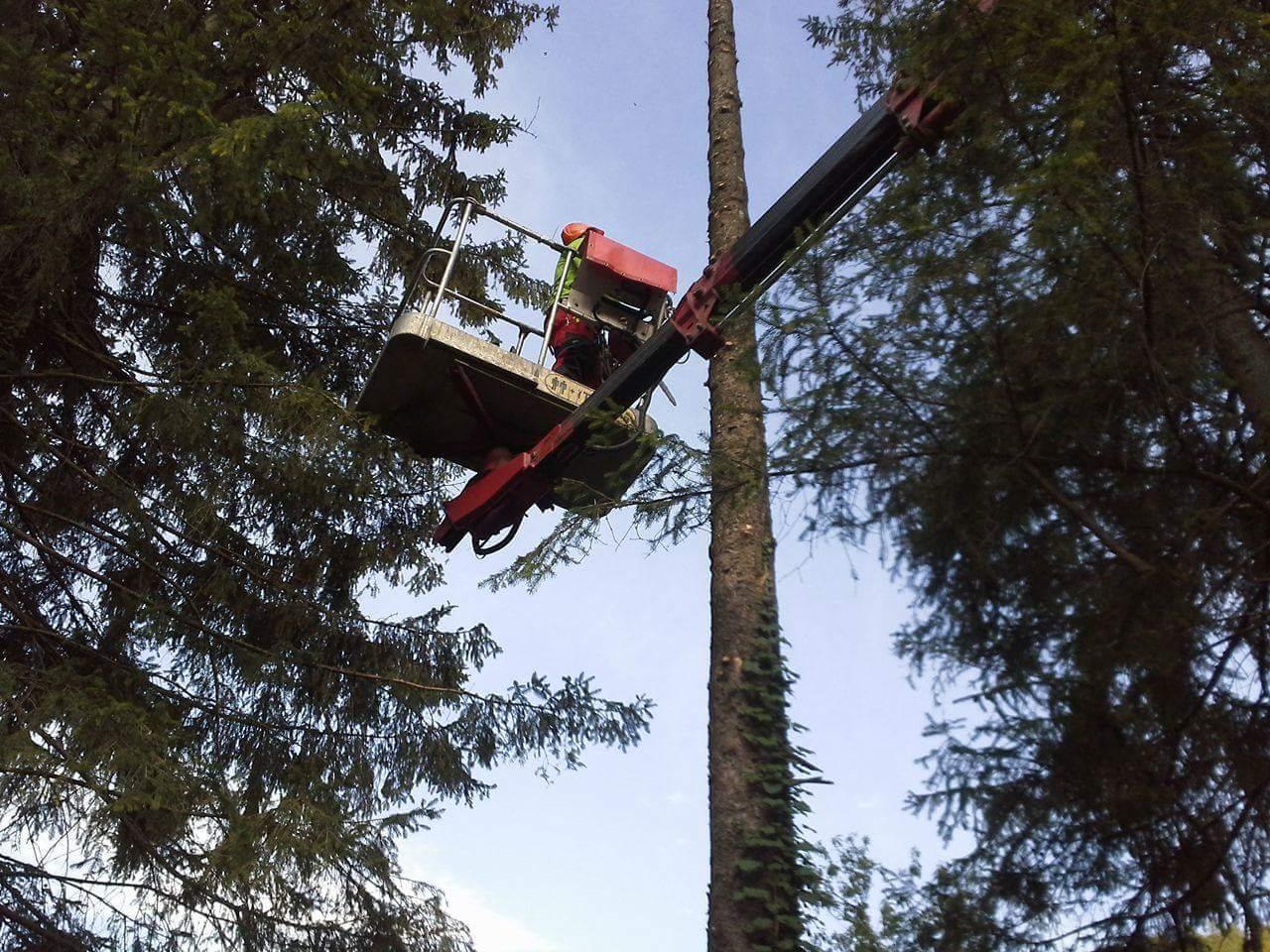 podiranje dreves palček