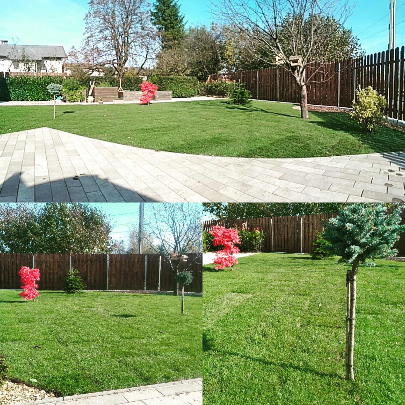 Urejanje okolice, travni tepihi