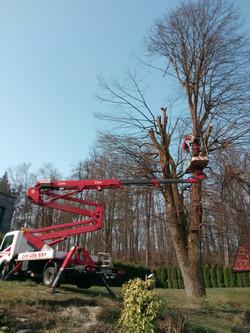 Podiranje drevja