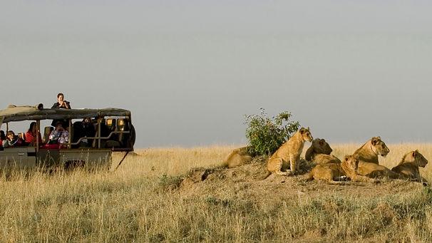 lions-mara_edited.jpg