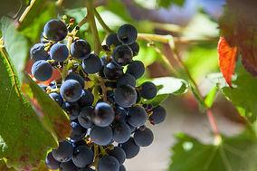 web-grootbos-experience-wine-tour-10.jpg
