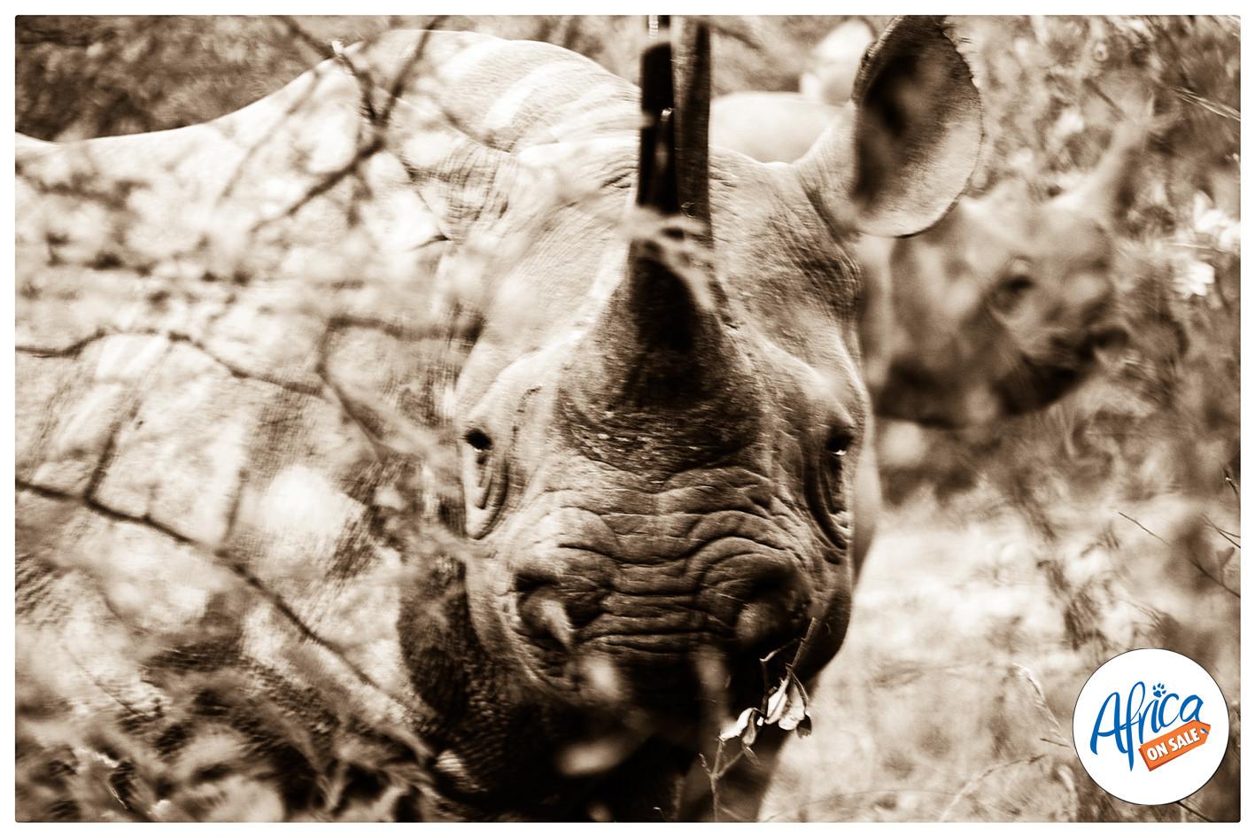 Rhino-black