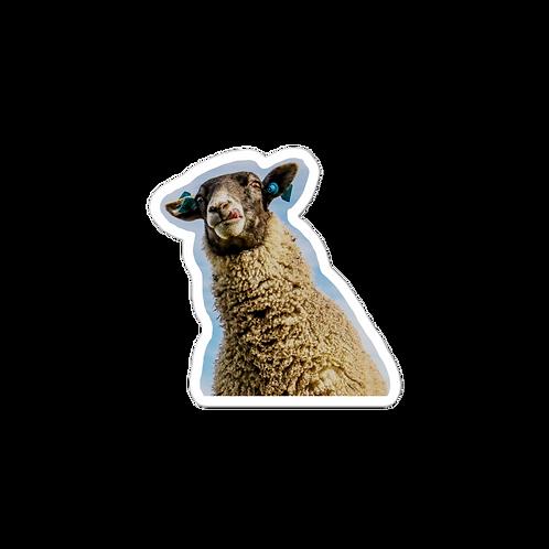 Silly slurping sheep sticker