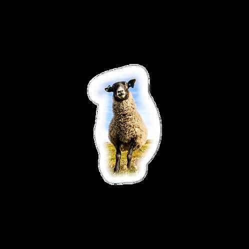 Baaaaaaaaaaaaaa, I'm a sheep sticker