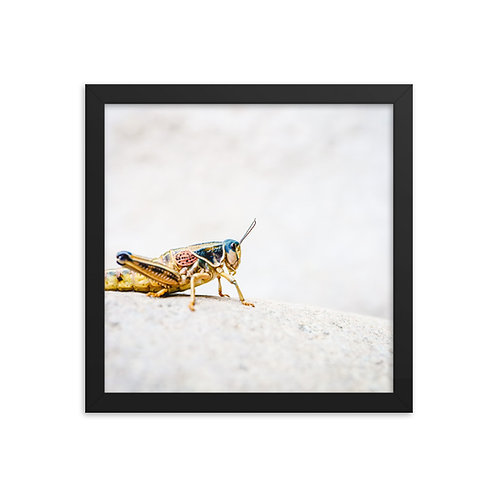 Grasshopper in blue and red