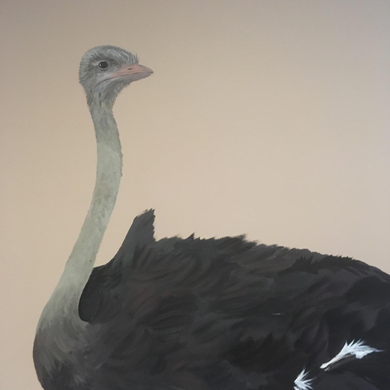 Struisvogel detail