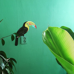 Toekan op groene muur