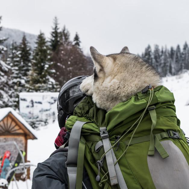 Doggy Backpacks