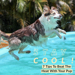 Staying Cool!
