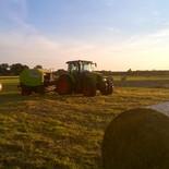 Heuernte auf den Feldern