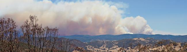 bushfire2.png