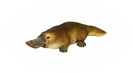 Platypus1.png