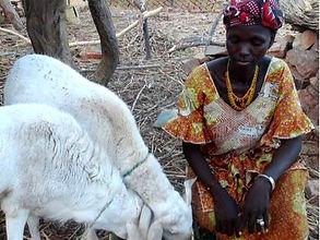 Zebunet micro-crédit Afrique Asie