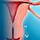 Thumbnail: Como Funciona o Ciclo Menstrual