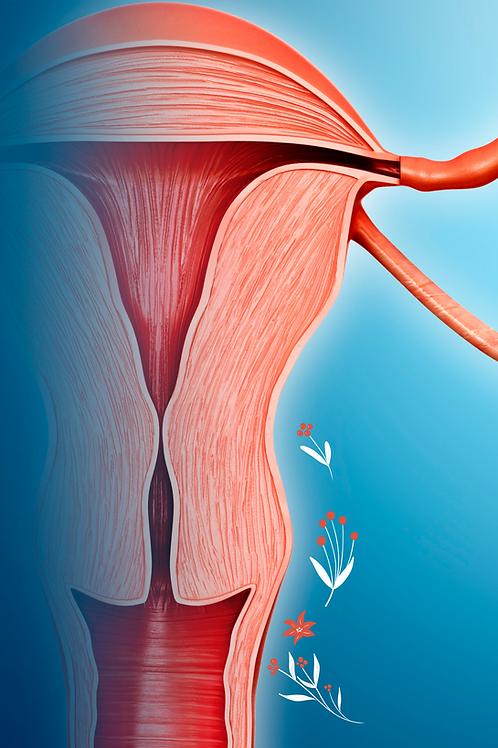 Como Funciona o Ciclo Menstrual