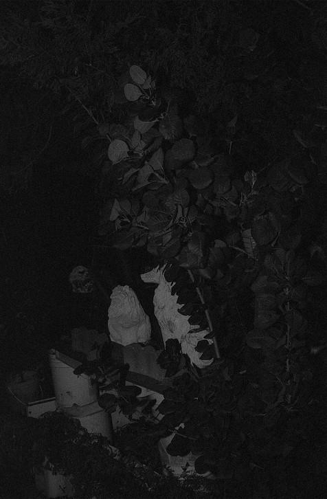 nocturne-1.jpg